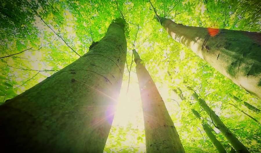 Sonnenstrahlen, Wald, Paulownia-Bäume, TREEME, Geld anlegen, nachhaltige Geldanlage, Nachhaltigkeit