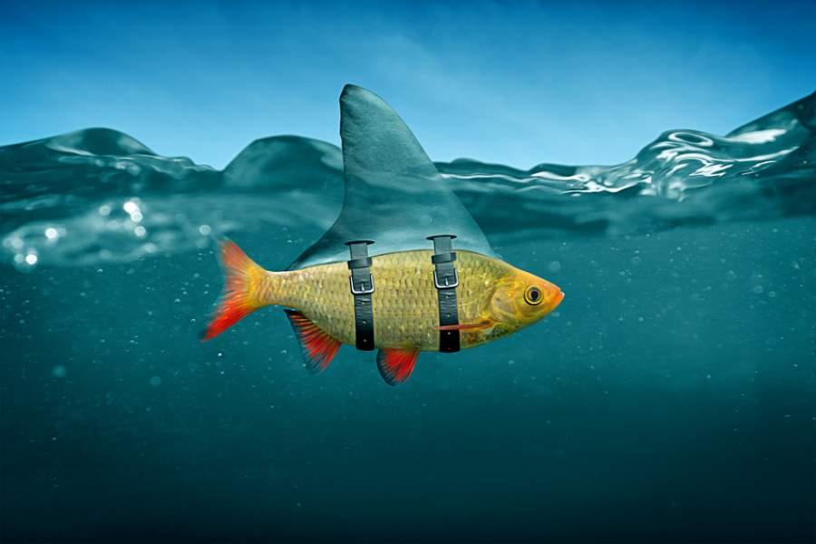 kleiner Fisch, Haifischflosse, unter Wasser, witziges Motiv, Einprägsamkeit, individuell bedruckte Verpackungen, Kartons nach Maß, Offline Marketing, Branding stärken