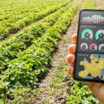 Feld für Gemüseanbau, eine Hand hält ein Smartphone mit Anzeigen von Überwachungstechnik der Generation Industrie 4.0