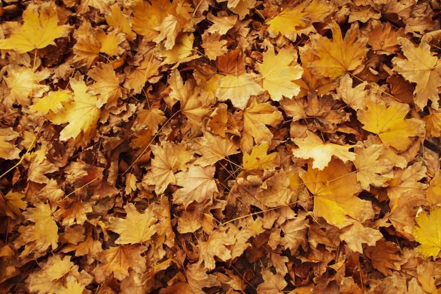 Buntes Herbstlaub liegt auf dem Rasen und bedeckt diesen nahezu vollständig